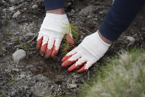 65 документов по вопросам экологии и охраны окружающей среды подготовлены МПА СНГ