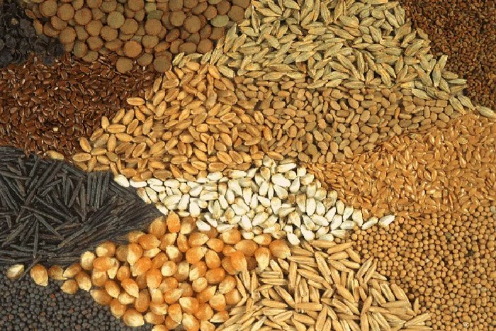 Продовольственную безопасность, поставки семян овощей и фруктов обсуждают в Москве