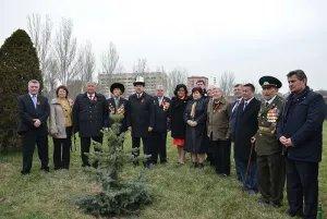 Молодые ели появились в центре Бишкека