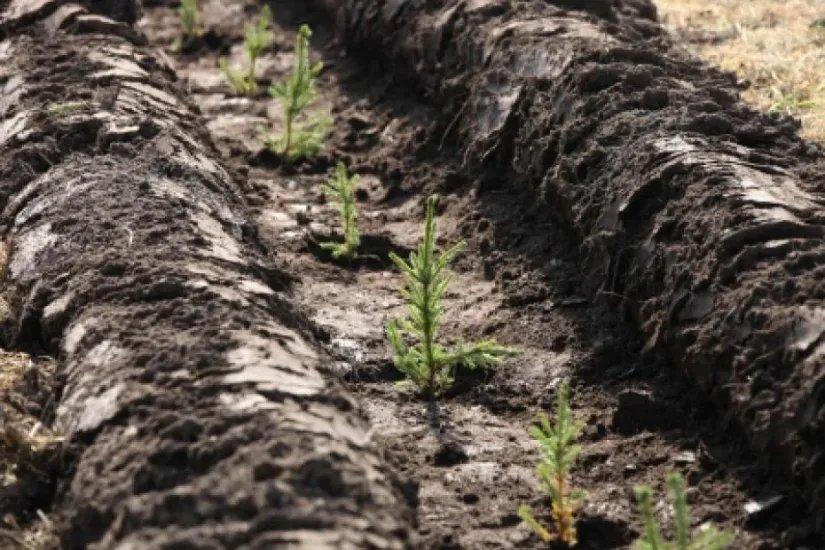 В Республике Беларусь проходит акция «Зеленая волна»