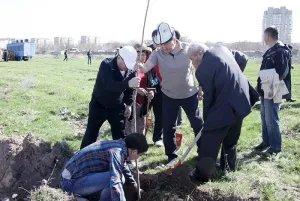 В Кыргызской Республике продолжается посадка саженцев