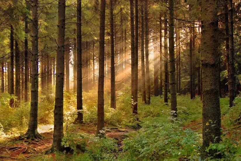 Беларусь возглавила Совет по лесопромышленному комплексу и лесному хозяйству СНГ