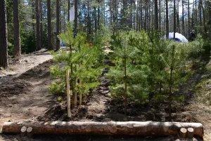 Секретариат Совета МПА СНГ принял участие в экологической акции «Всероссийский день посадки леса»